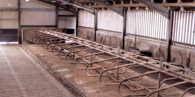 Cow cubicle beds